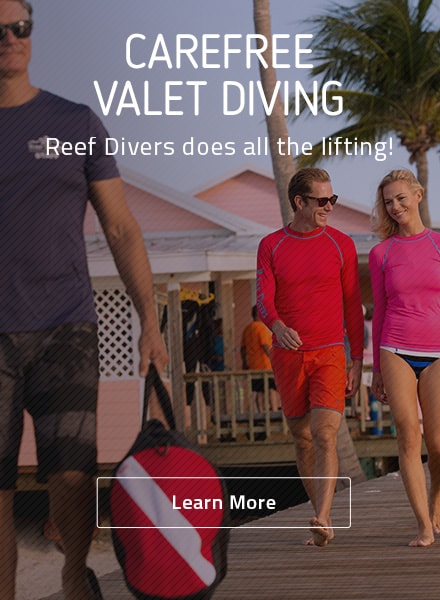 little cayman diving ad